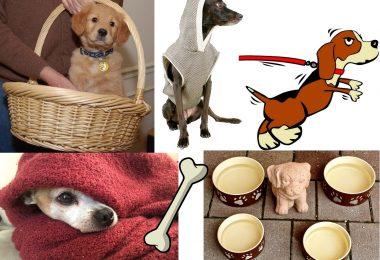 accessoires chien